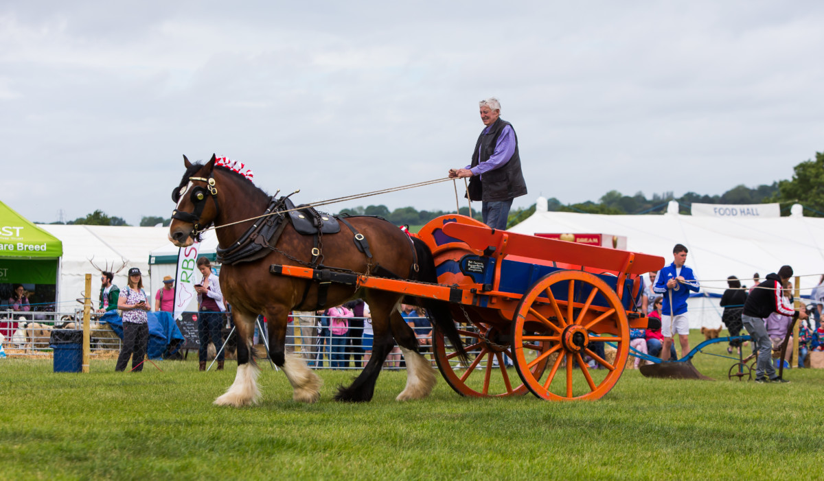 Hertfordshire County Show (CANCELLED)