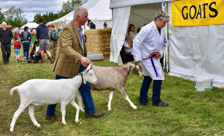 Gransden Show (CANCELLED)